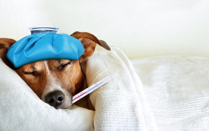 免疫力が低下している犬
